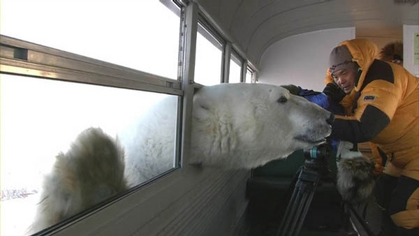 Curious Polar Bear picture