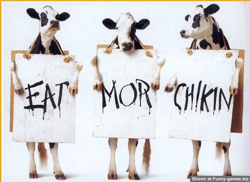 Funny Cow Pic picture