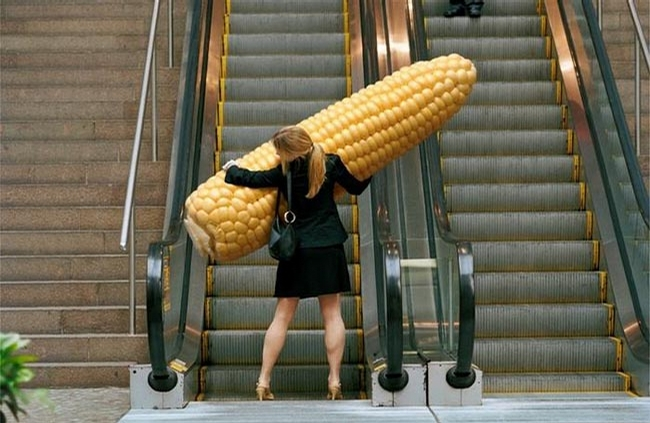 Huge Corn picture