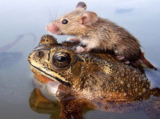 Frog and Mouse picture