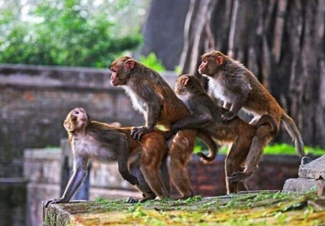 Monkey Train picture
