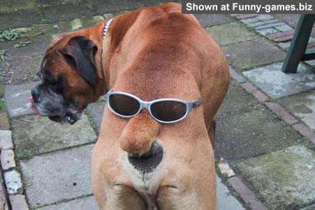 Cool Dog 2 picture