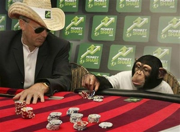 Poker Monkey picture