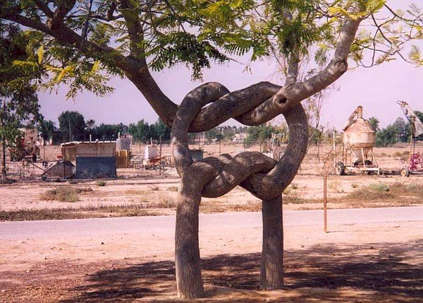 Trees in Love picture