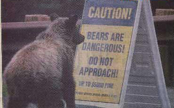 Dangerous Bears picture