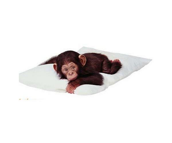 Cute Little Monkey picture