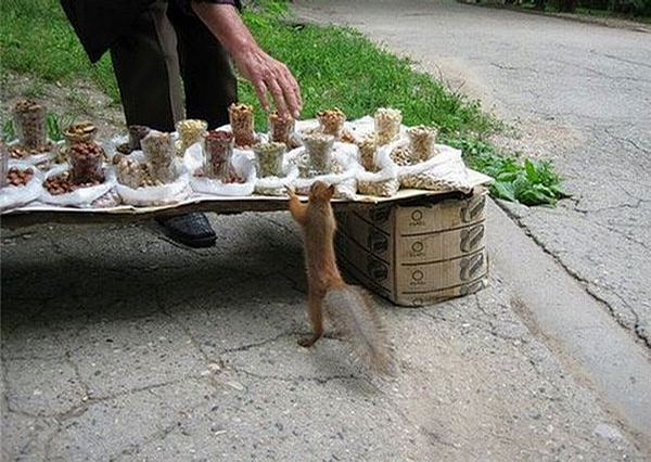 Hungry Squirrel picture