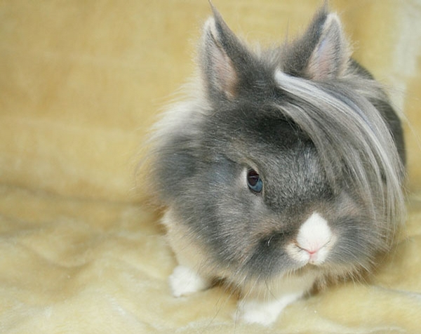 Beauty Rabbit picture