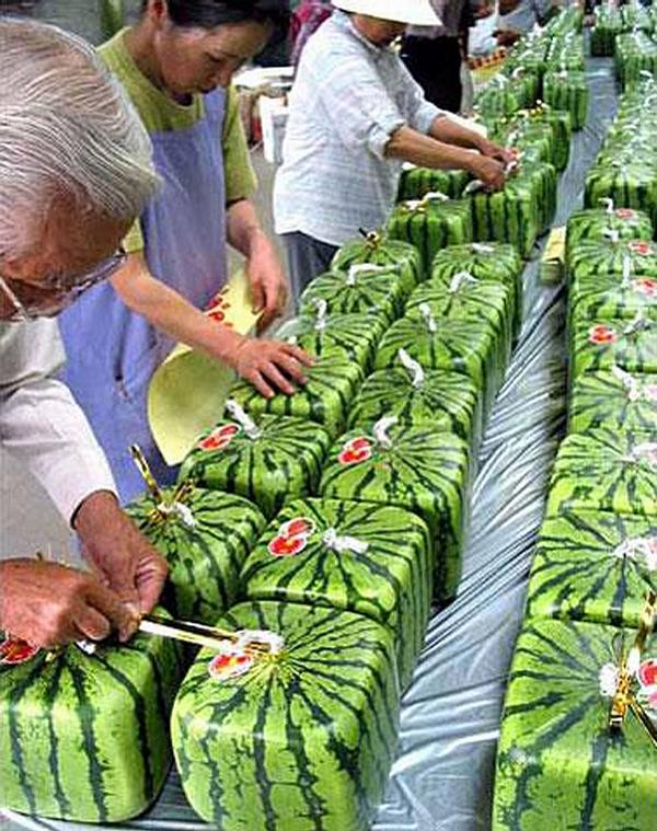 Square Melon picture