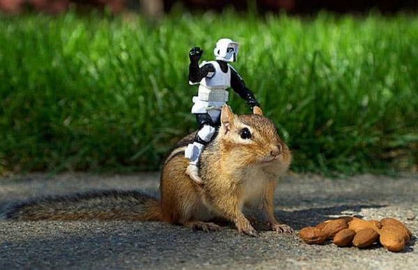 Squirrel Ranger picture