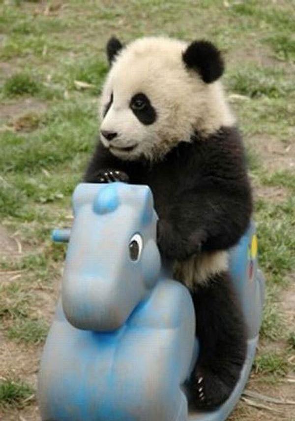Panda Kid picture
