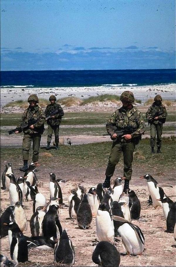 Beach Invasion picture