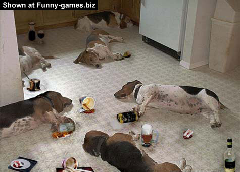 Animal Drinking Party picture