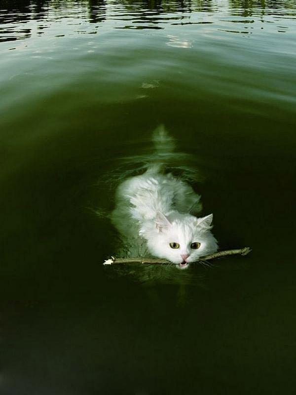 Good Cat picture