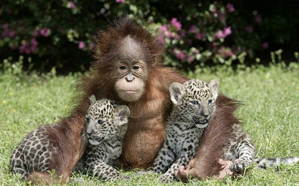 Monkey and Friends picture