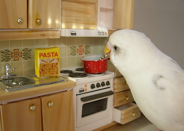 Cooking Parrot picture