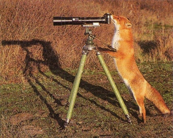 Fox Photographer picture