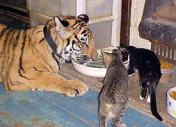 Cat Feeding picture