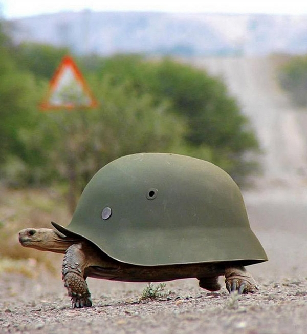 Armored Turtle picture