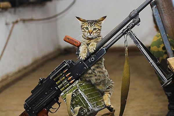 Cat Army picture
