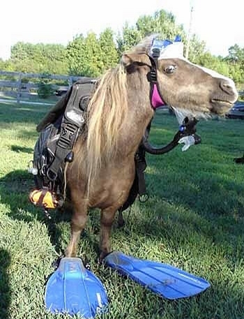 Horse Diver picture
