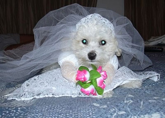 Puppy Bride picture