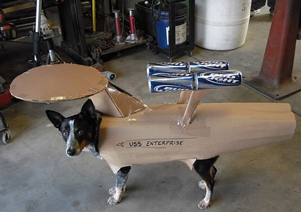 Star Wars Dog picture