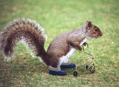 Old Squirrel picture