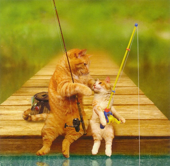 Cats Fishing picture