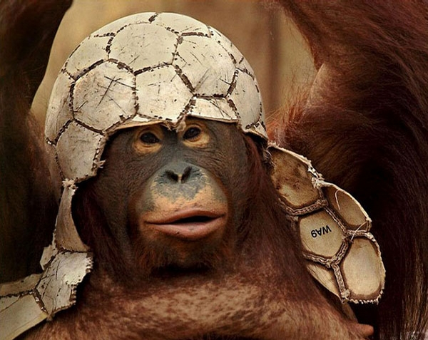 Monkey Fashion picture