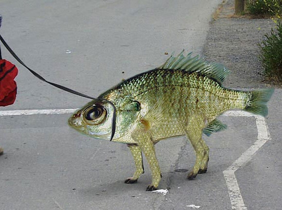 Fish Or Dog picture
