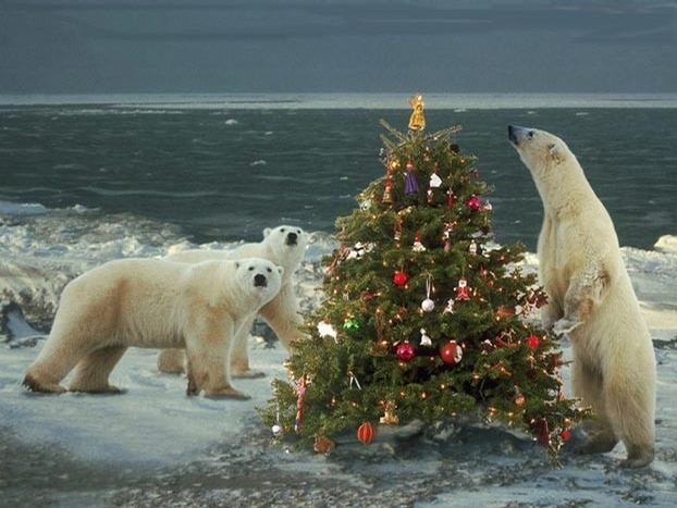 North Pole Christmas picture
