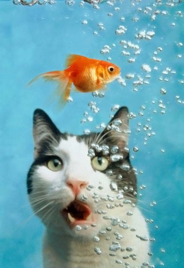 Fish And Cat picture