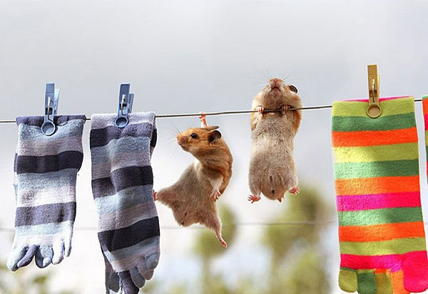 Sporty Hamsters picture