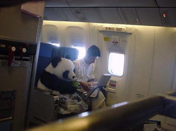 Wild Passenger picture