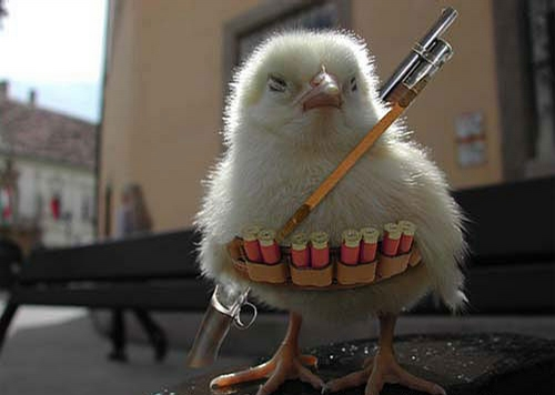 Armed Chick picture