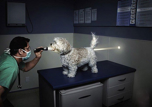 Flashlight Checkup picture
