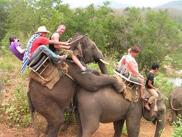 Elephant Joyride picture