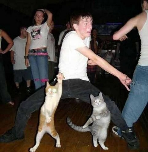 Dancing with Pussies picture