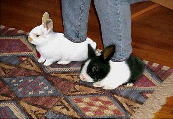 Bunny Babouche picture