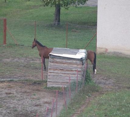 Longest Horse picture