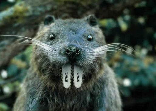 Stihl Beaver picture