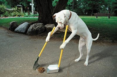 Hygieneminded Dog picture