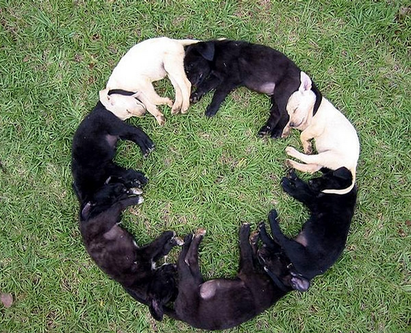 Dog Circle picture