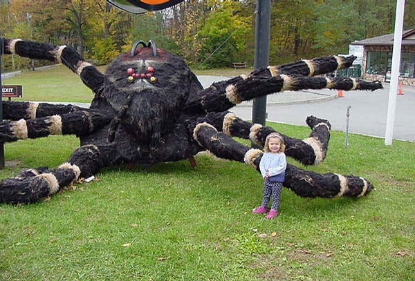 Scary Spider picture