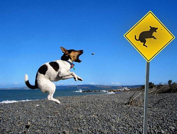 Fun Dog Sign picture