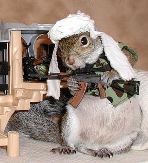 Armed Chipmunk picture