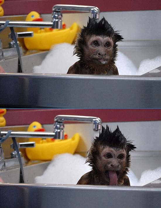 Happy Monkey picture