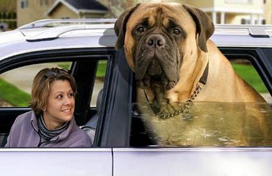 Big Head Dog picture