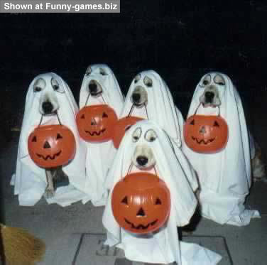 Dog Ghosts picture